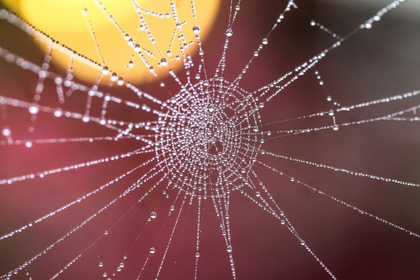 Spider Web of Connection